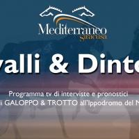 Cavalli-&-Dintorni-New-Miniatura.jpg
